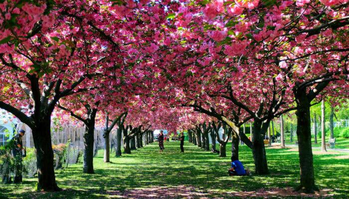 뉴욕의 날씨 - 봄