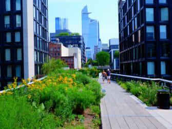 뉴욕의 공원 - 하이라인 파크 여름