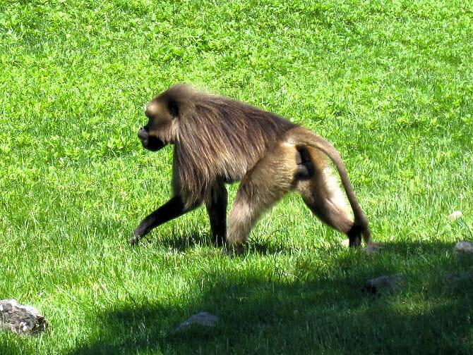 뉴욕 브롱크스 동물원 - 원숭이