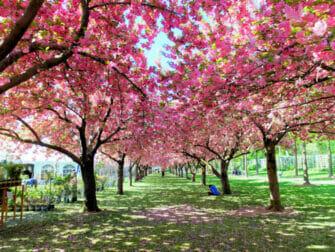 뉴욕 브루클린 - 식물원